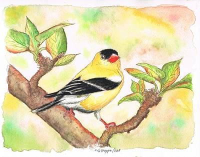 American Goldfinch Art Print by Carlos G Groppa