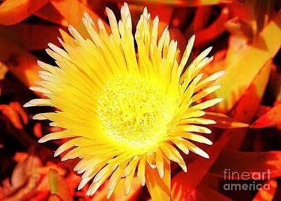 Photograph - Yellow Bloom by Jenny Revitz Soper