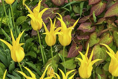 Bight Colors Photograph - Yellow Bloomers by Jon Berghoff