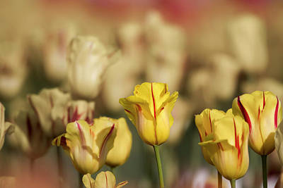 Photograph - Yellow Blooms by Craig Strand