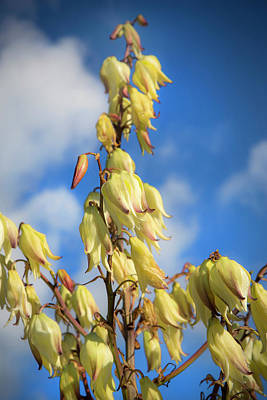 Photograph - Yellow Blooms by David Hare