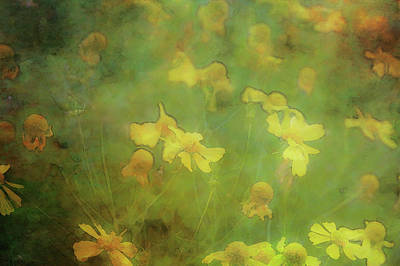 Photograph - Yellow Blossoms 4740 Idp_2 by Steven Ward