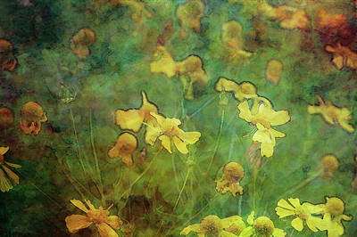 Photograph - Yellow Blossoms Impression 4740 Idp_3 by Steven Ward