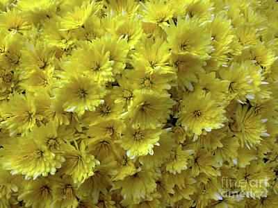 Yellow Bouquet Art Print by Jasna Dragun