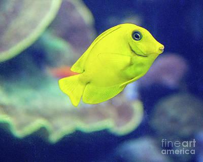 Photograph - Yellow Boy by Cheryl Del Toro