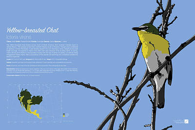 Digital Art - Yellow-breasted Chat Infographic by Marcus England