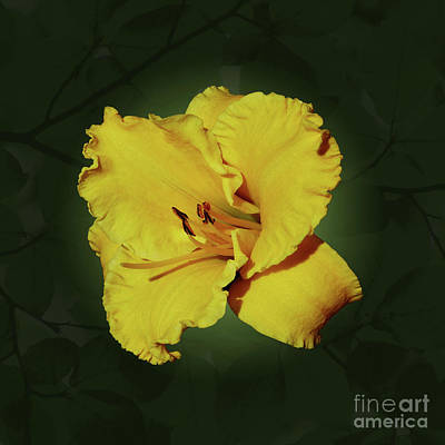 Photograph - Yellow Brilliance by Methune Hively