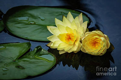 Photograph - Yellow Buddies by Sabrina L Ryan