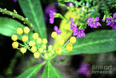 Photograph - Yellow Buds by Jackie Farnsworth