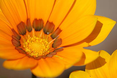 Photograph - Yellow Burst by Lucia Vicari
