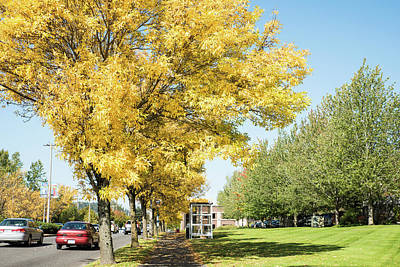 Photograph - Yellow Bus Stop In Bellingham by Tom Cochran