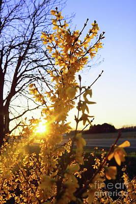 Photograph - Yellow Bush by Erick Schmidt