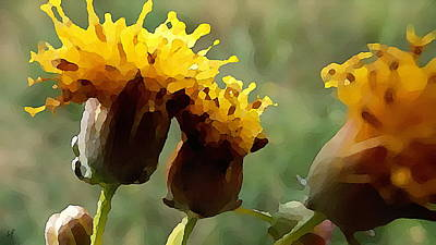 Digital Art - Yellow Bushyheads by Shelli Fitzpatrick