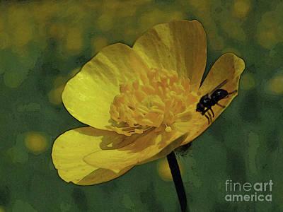 Photograph - Yellow Buttercup by Kim Tran
