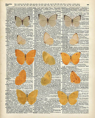 Drawing - Yellow Butterflies Over Dictionary Book Page by Jacob Kuch