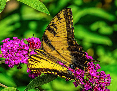 Photograph - Yellow Butterfly In The Garden by Nick Zelinsky