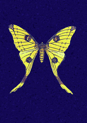 Digital Art - Yellow Butterfly On Blue by Georgiana Romanovna