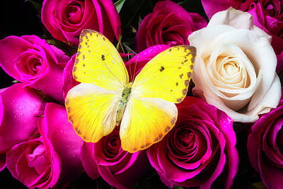 Beautiful Butterfly Photograph - Yellow Butterfly On Lovely Roses by Garry Gay