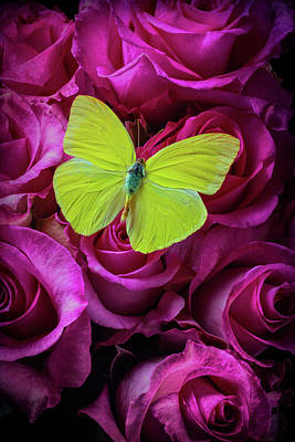 Butterfly Photograph - Yellow Butterfly On Pink Moody Roses by Garry Gay