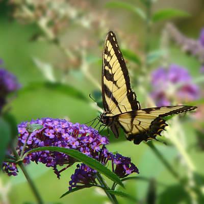 Yellow Butterfly On Purple Art Print