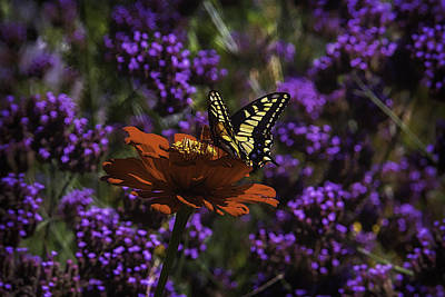 Chrysanthemums Photograph - Yellow Butterfly On Red Petals by Garry Gay
