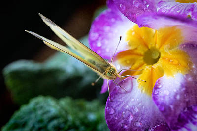Photograph - Yellow Butterfly On The Flower by Lilia D