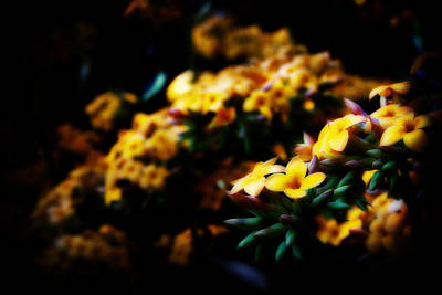 Yellow Art Print by Cabral Stock