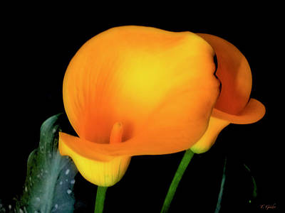 Photograph - Yellow Calla Lilies - 01 by Tony Grider
