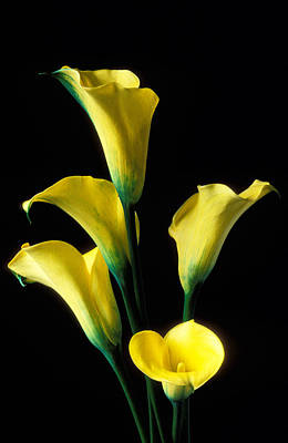 Lilies Wall Art - Photograph - Yellow Calla Lilies  by Garry Gay
