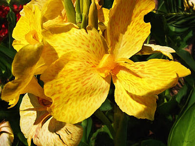 Yellow Canna Lily Art Print by Shawna Rowe