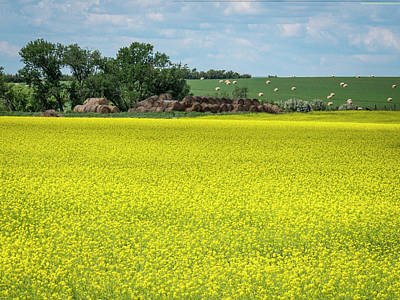 Photograph - Yellow Canola Field by Patti Deters