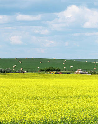 Photograph - Yellow Canola Field - Vertical by Patti Deters