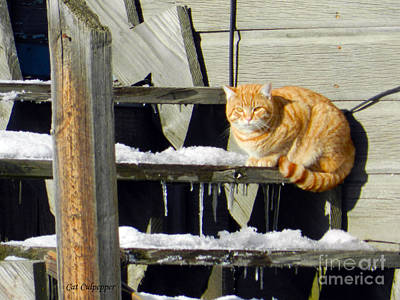 Old House Photograph - Yellow Cat by Cat Culpepper