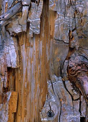 Photograph - Yellow Cedar Trunk by Tim Fitzharris