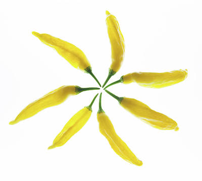 Chillie Photograph - Yellow Chillie Star by Helen Northcott