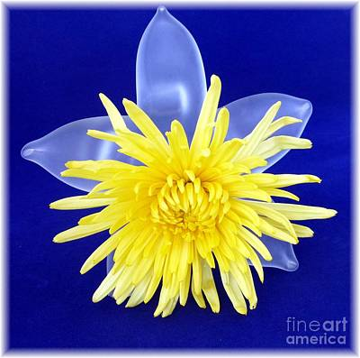 Photograph - Yellow Chrysanthemum On Glass by Barbie Corbett-Newmin