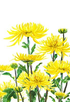 Yellow Chrysanthemums Art Print by Color Color