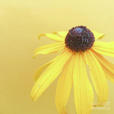 Art Print featuring the photograph Yellow by Cindy Garber Iverson