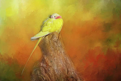 Photograph - Yellow Cockatiel by Michele Wright