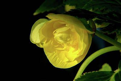 Photograph - Yellow Composite by Douglas Barnett