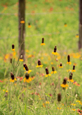 Photograph - Yellow Cone Flower by Chris Coffee