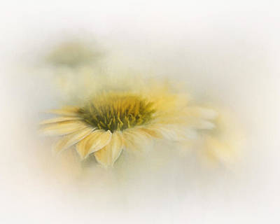 Photograph - Yellow Coneflower by David and Carol Kelly