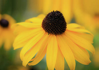 Photograph - Yellow Coneflower Macro by Joni Eskridge