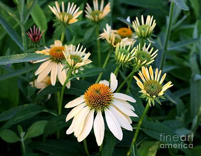 Photograph - Yellow Coneflower by Marcia Lee Jones