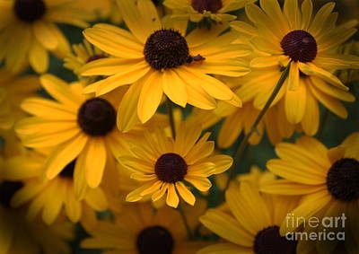 Photograph - Yellow Coneflowers 2 by Erica Hanel