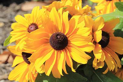 Photograph - Yellow Coneflowers by Angela Murdock