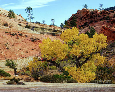 Photograph - Yellow Cotton In Zion Park by Roxie Crouch