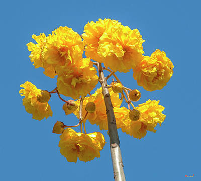 Photograph - Yellow Cotton Tree Dthn0232 by Gerry Gantt