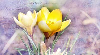 Painting - Yellow Crocus Blossom by Joy of Life Art