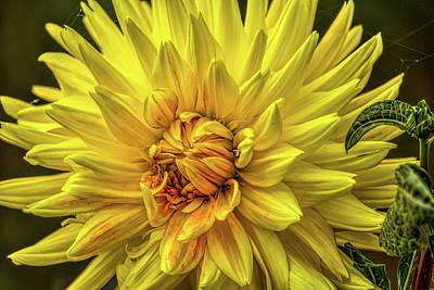 Rhinelander  - Yellow Dahlia by Dale Kauzlaric